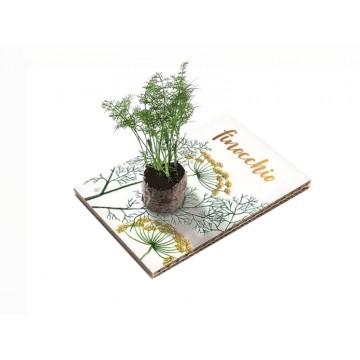 Eco Cartolina - Finocchio