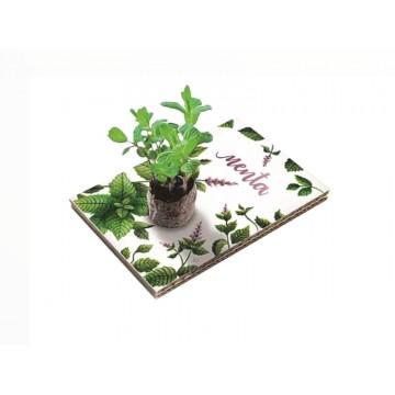 Eco Cartolina - Menta