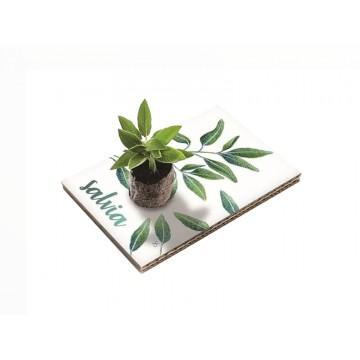 Eco Cartolina - Salvia