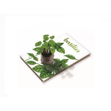 Eco Cartolina - Basilico